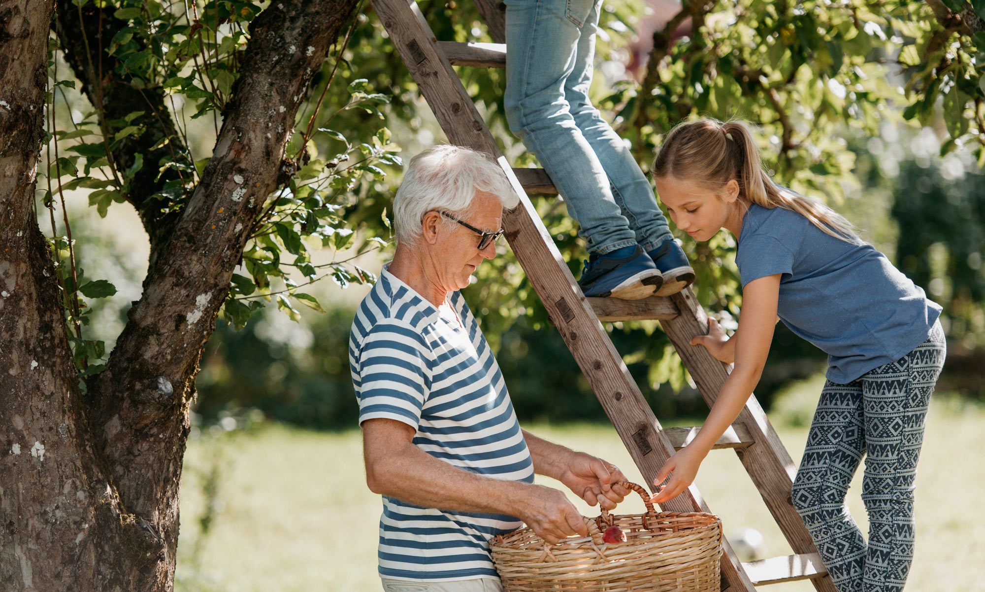 Older man and children on ladder picking apples.
